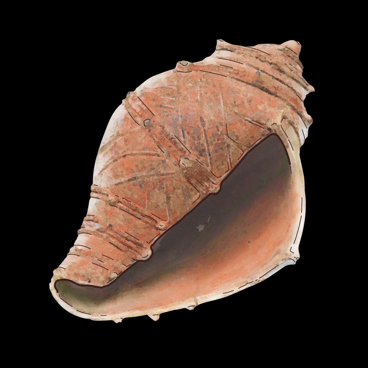 17. 巻貝形土製品